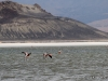 31-20140410-07-surire-flamingos-101
