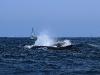 los-organos-observamos-ballenas-25-09-2010-10-15-12