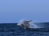 los-organos-observamos-ballenas-25-09-2010-10-21-28
