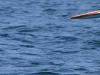 los-organos-observamos-ballenas-25-09-2010-10-39-410
