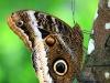2013-05-11-01-conservatorio-mariposa-19