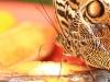 2013-05-11-01-conservatorio-mariposa-27