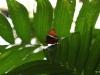 2013-05-11-01-conservatorio-mariposa-58