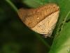 2013-05-11-01-conservatorio-mariposa-62
