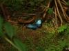 2013-05-11-01-conservatorio-mariposa-66
