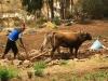 2010_11_11-02-amantani-6