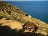 2010_11_15-07-isla-del-sol-11