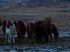20121219-03-pferde-14