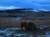 20121219-03-pferde-3
