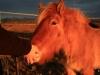 121224-04-pferde-26