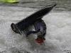 12-graz-kayak-freestyle-mur-meisterschaften2012-02-06-2012-11-30-18