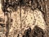 prater-krebsenwasser-marz2015-11-von-17