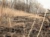 prater-krebsenwasser-marz2015-12-von-17