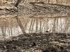 prater-krebsenwasser-marz2015-14-von-17