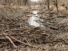 prater-krebsenwasser-marz2015-16-von-17