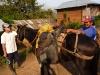 chachapoyas-congon-caballos