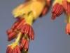 donauinsel-wien-makro-landscape-fruhling2012-21-03-2012-12-49-50