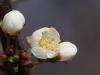donauinsel-wien-makro-landscape-fruhling2012-21-03-2012-13-43-11