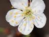 donauinsel-wien-makro-landscape-fruhling2012-21-03-2012-13-45-11