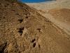 querulpa-huellas-dinosaurier-07-11-2010-20-23-43-07-11-2010-20-32-13-2010-20-32-13
