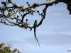 2013-05-24-01-quetzal-tour-159
