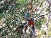 2013-05-24-01-quetzal-tour-53