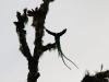 2013-05-24-01-quetzal-tour-95