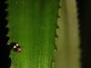 rurrenabaque-la-selva-communidad-3hermanos-25-11-2010-07-55-58