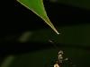 rurrenabaque-la-selva-hormiga-25-11-2010-11-32-25