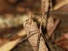 rurrenabaque-la-selva-mantis-26-11-2010-14-19-43