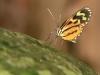 rurrenabaque-la-selva-mariposa-26-11-2010-13-31-34