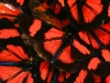 salkantay-trek-to-machu-picchu-mariposas