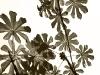 salkantay-trek-to-machu-picchu-plantas1