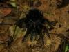 2010_11_25-08-tarantula-12