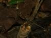 2010_11_26-09-mantis