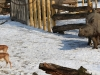 02-20130217-tiergarten-schonbrunn-13
