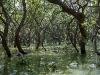 cambodia-tonle-sap-lake-33