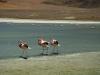 2010_12_09-04-flamingos-100