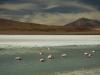 2010_12_09-04-flamingos-125