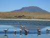 2010_12_09-04-flamingos-22