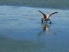 2010_12_09-04-flamingos-36