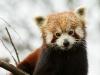 wien-zoo-schonbrunn-2013-1-von-30