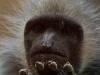 wien-zoo-schonbrunn-2013-11-von-30