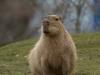 wien-zoo-schonbrunn-2013-26-von-30