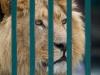 wien-zoo-schonbrunn-2013-27-von-30