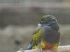 wien-zoo-schonbrunn-2013-30-von-30