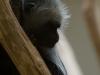 wien-zoo-schonbrunn-2013-6-von-30