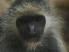 wien-zoo-schonbrunn-2013-7-von-30