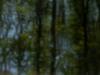 world-pinhole-day2013-ritchy-pop-lainzer-tiergarten-9810