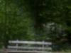 world-pinhole-day2013-ritchy-pop-lainzer-tiergarten-9847